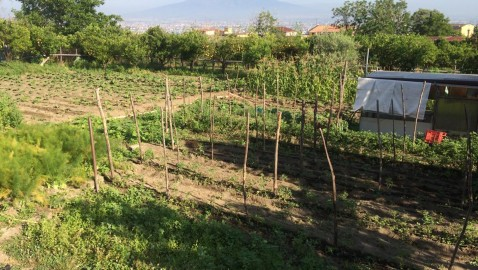 """«Abbiamo """"Solo una terra""""». Giuseppe D'Apuzzo un Angrese che ci indica la via per un'agricoltura eco-sostenibile."""