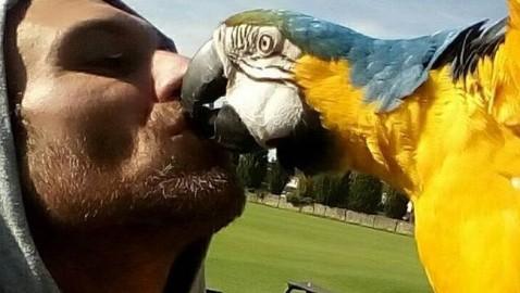 Bella notizia per Dorian, il pappagallo del mago Luigi Grimaldi. Autorizzazione ad uscire fino a due volte al giorno.